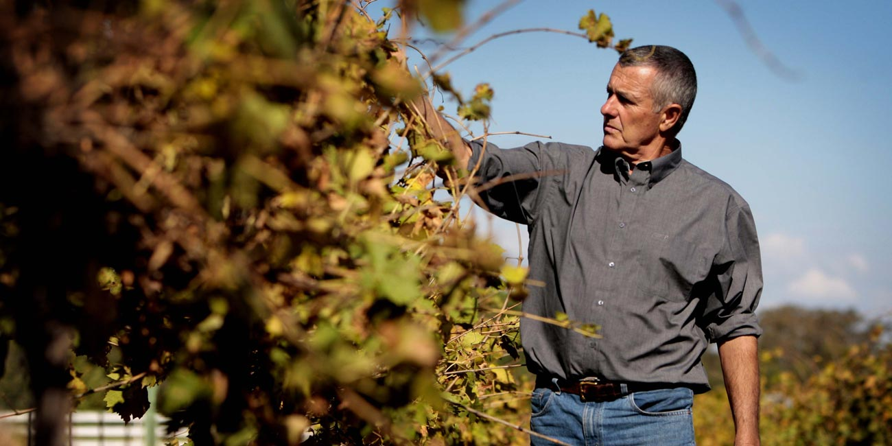 freeman-vineyard-brian