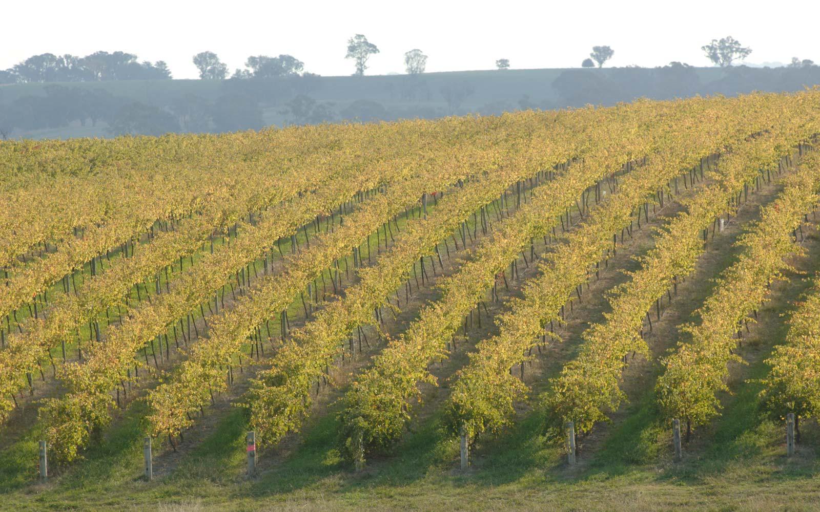 Image result for freeman hilltops vineyard images